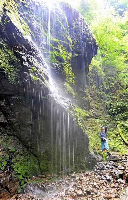 水が美しい白糸のように滴る滝=坂井市丸岡町吉谷
