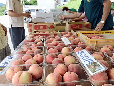 飯綱町「丹霞郷」の桃が旬、祭り始まる