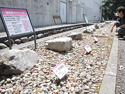 「伊那谷の岩石園」開設 飯田市美術博物館、標本25点展示