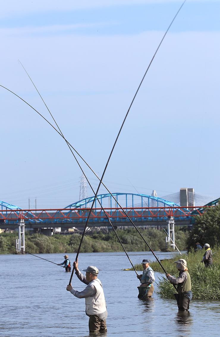 コロコロ釣りを楽しむ愛好者たち=富山市の神通川富山大橋付近