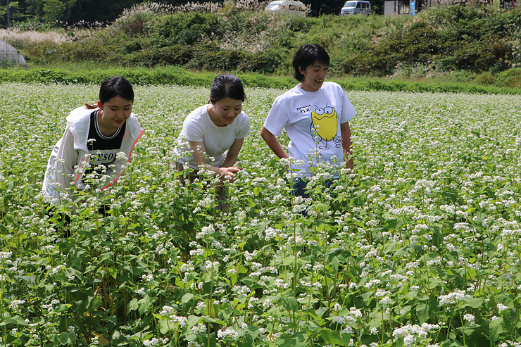 畑一面を彩るソバの白い花