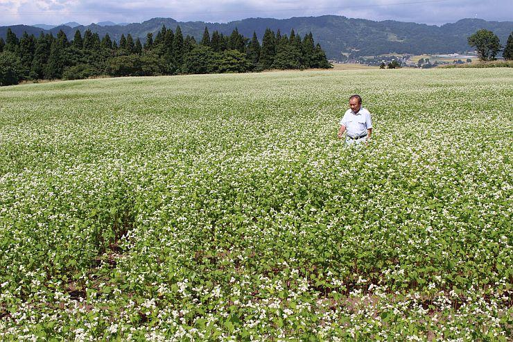 高原に広がるソバ畑。かれんな白い花をつけている=6日、小千谷市の山本山高原