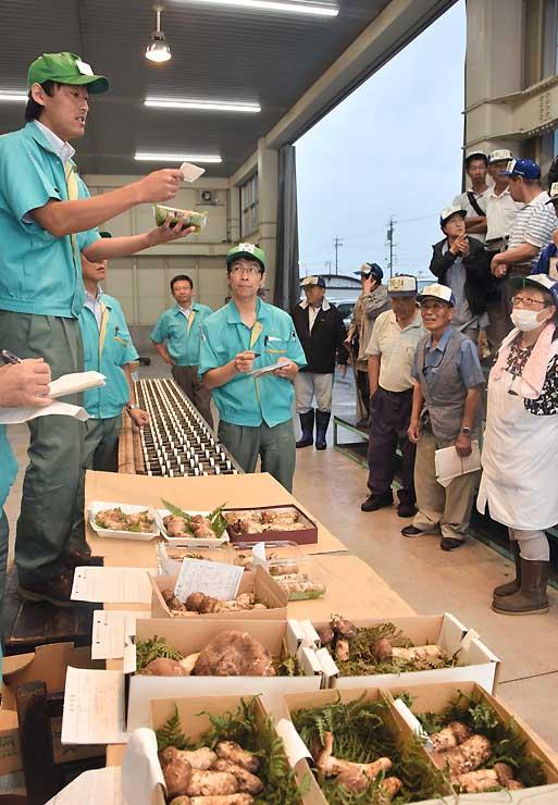 競りにかけられたマツタケ=13日、上田市秋和の長野県連合青果