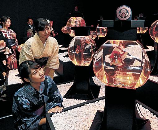 金魚と光と芸術が織り成す幻想的な作品に見入る関係者=金沢21世紀美術館