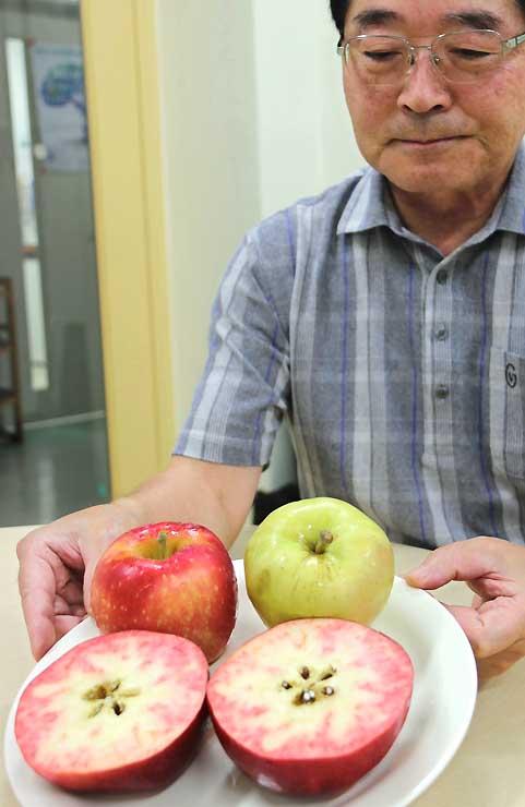 果肉が赤いレッドパールの断面を見せる伴野教授。奥はレッドゴールド(左)とピンクパール