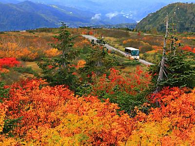 燃える山肌 立山の紅葉見頃