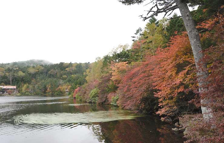 葉が色付きつつある白駒池=27日午後2時40分