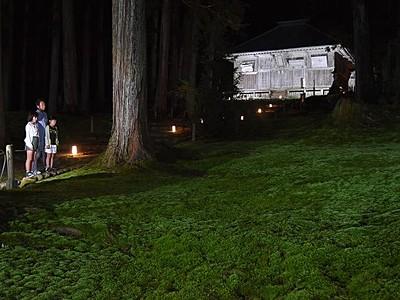 秋夜のコケ、濃淡輝く 勝山・平泉寺ライトアップ