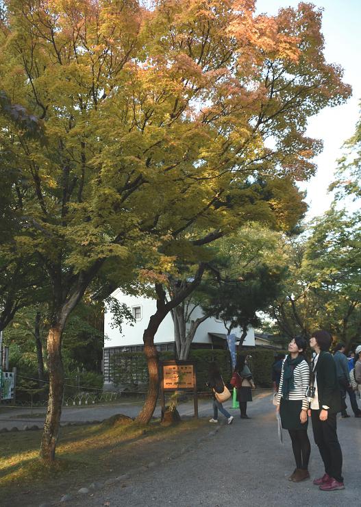 懐古園で色づき始めた木を見る入園者