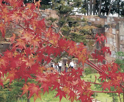 色紙短冊積み石垣を背景に色づくモミジ=金沢城公園の玉泉院丸庭園