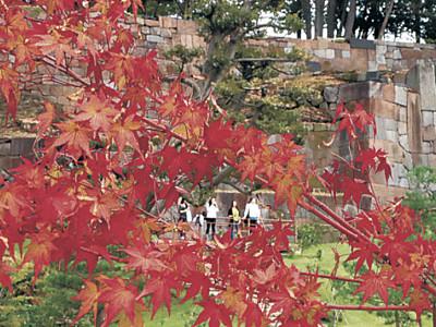 秋色共演、金沢城公園の玉泉院丸庭園 モミジと石垣