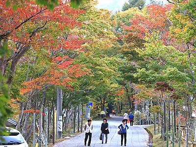 カエデの紅葉、石畳包み込む 阿智・治部坂高原