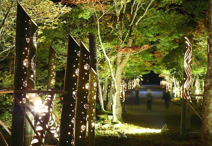 竹筒から漏れる明かりに照らされたカエデの並木道