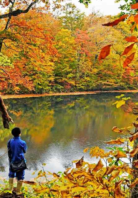 周囲の木々が赤や黄に染まり、秋の装いとなった刈込池=25日、福井県大野市上打波