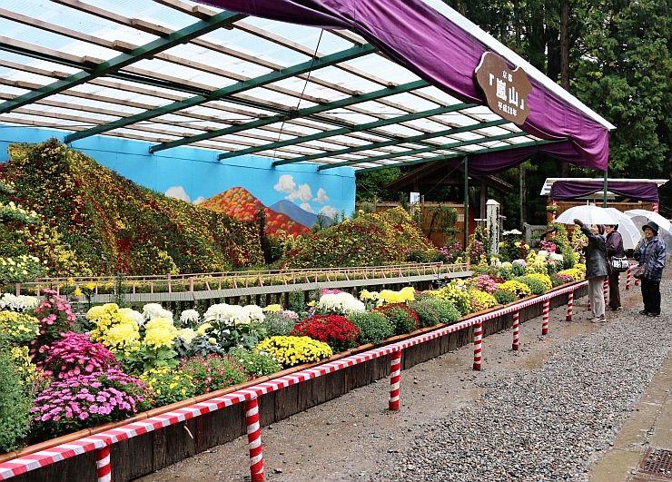 景勝地「嵐山」を表現した弥彦菊まつりの大風景花壇=1日、弥彦神社