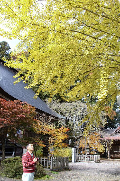イチョウやカエデなどの紅葉が見頃の津金寺