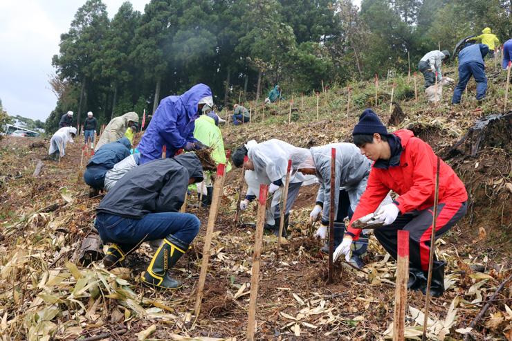 カヤの苗を植える参加者=南砺市福光地域