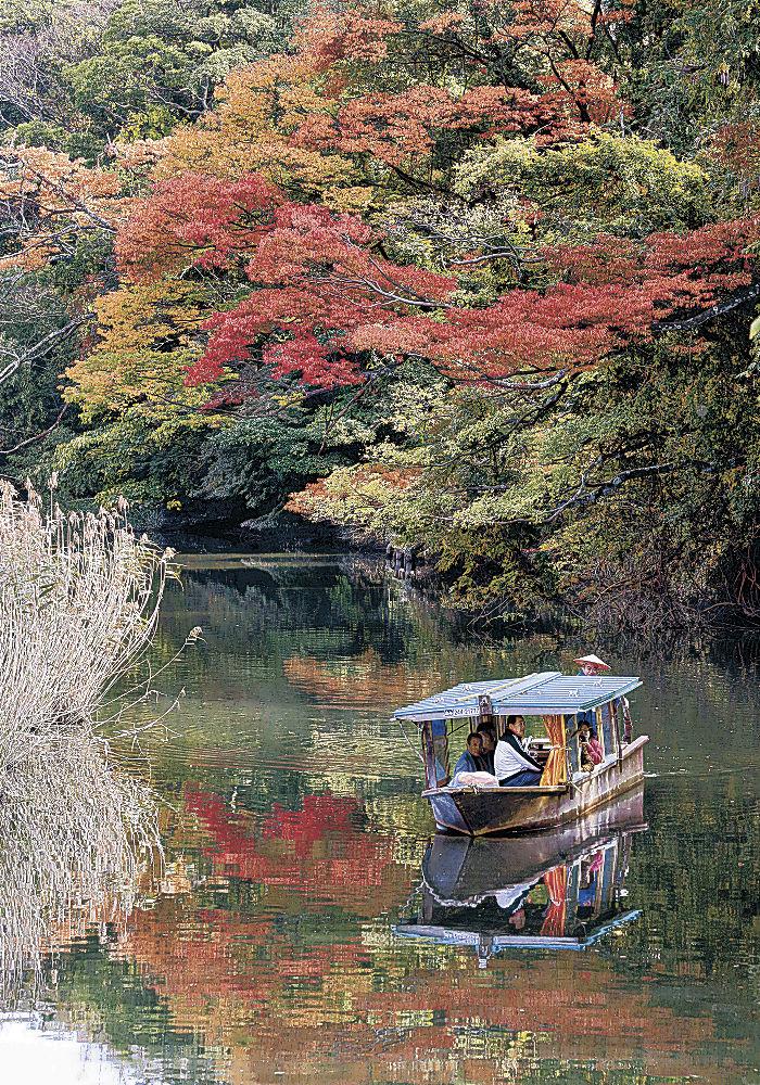 紅葉が見頃を迎えた木々の下を進む流し舟=加賀市の旧大聖寺川