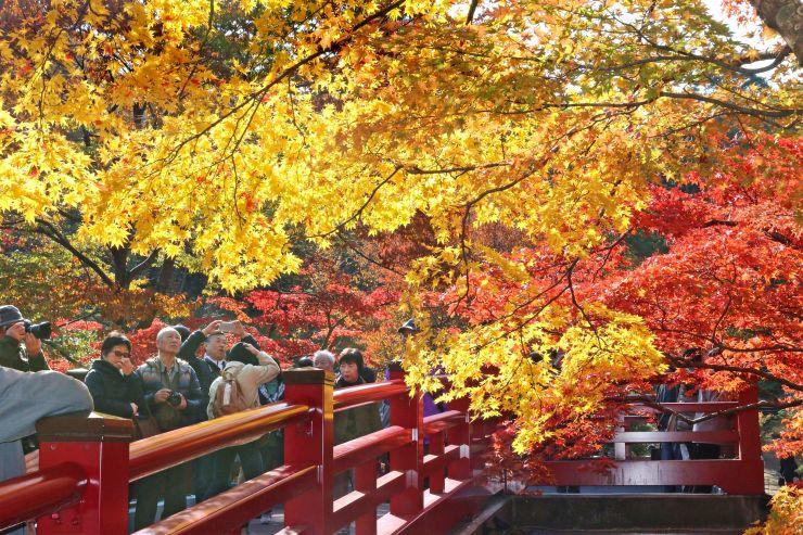 弥彦公園のもみじ谷の観月橋から紅葉を眺める観光客たち=7日、弥彦村弥彦