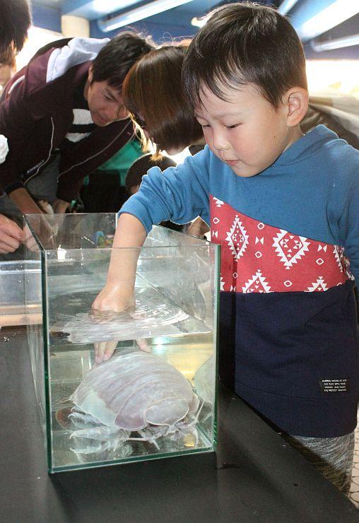 ダイオウグソクムシに触る子どもら=8日、上越市西本町4の市立水族博物館