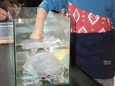 ダイオウグソクムシに直接タッチ 18日まで上越水族館
