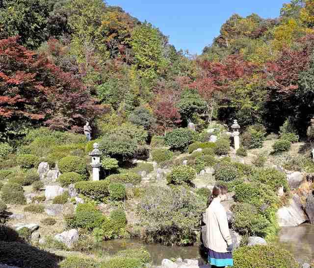モミジなどが色づく西福寺の庭園=11日、敦賀市原