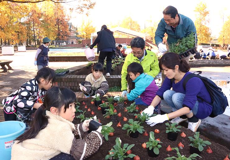 来春のフェアに向け、チューリップ球根などを植え込む参加者=砺波チューリップ公園