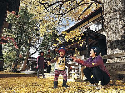 黄金色の庭 イチョウ落葉、加賀・山の文化館
