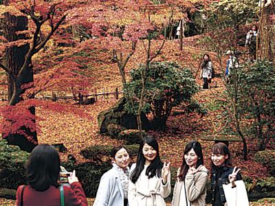 兼六園の紅葉ピーク 山崎山、赤く色づく