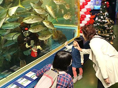 水槽に「赤鼻のトナカイ」 魚津水族館でダイバー変身