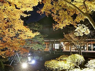 冷気も心地よく 紅葉ライトアップ 新潟・北方博物館