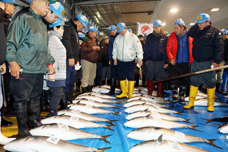 シーズン開始が宣言され、競りに掛けられる「ひみ寒ぶり」=氷見魚市場