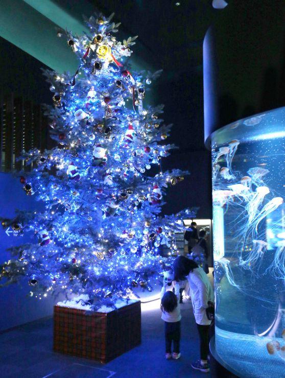 マリンピア日本海に展示されたクリスマスツリー=26日、新潟市中央区