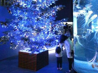 クラゲ、幻想的にゆらめく 深海のクリスマス マリンピア