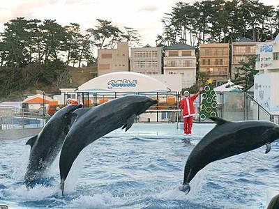 クリスマスイルカショー 越前松島水族館