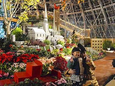 タマネギハウス、Xマスムードに 坂井市グリーンセンター