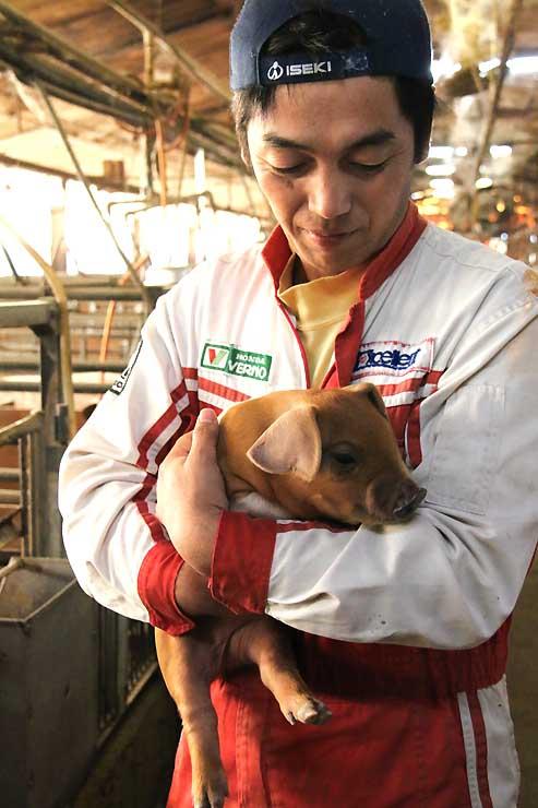 「くりん豚」を生産する知久養豚の子豚