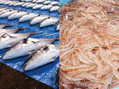 「魚料理味わう旅」富山3位 寒ブリ・シロエビ人気