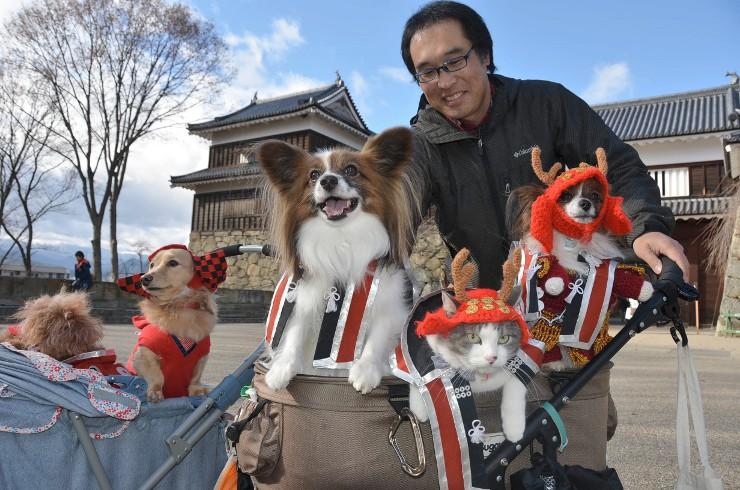 上田城跡公園で「赤備え」に身を包んだ犬と猫を見守る下倉さん