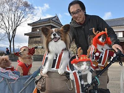 「赤備え」で散歩の犬と猫 上田城跡公園周辺で人気