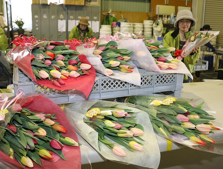 出荷が始まったチューリップの切り花