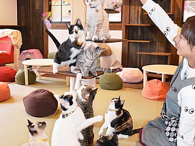 猫も人も幸せに 白馬の温泉宿にふれあいの場