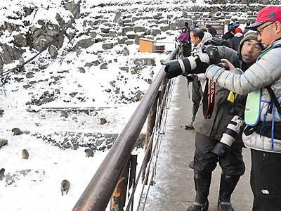 「スノーモンキー」をパチリ 山ノ内で写真撮影会