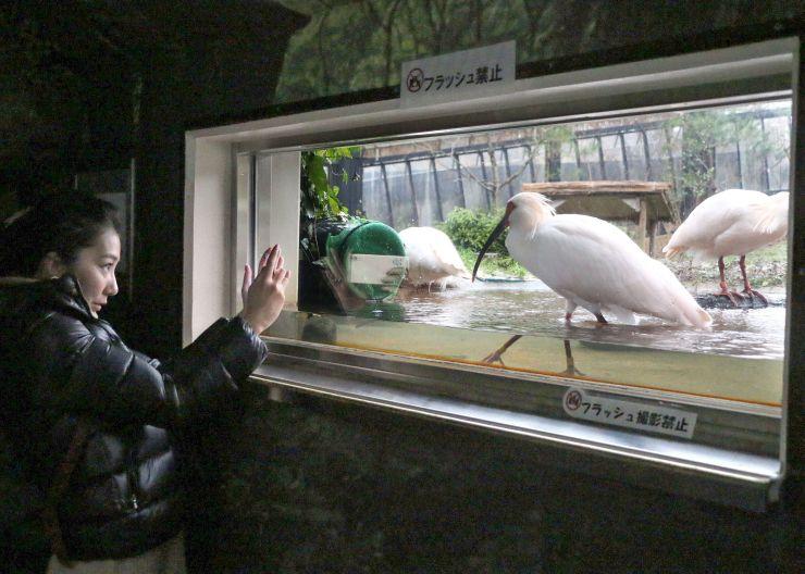 ことしの開園初日、トキを観察する観光客ら=2日、佐渡市新穂長畝