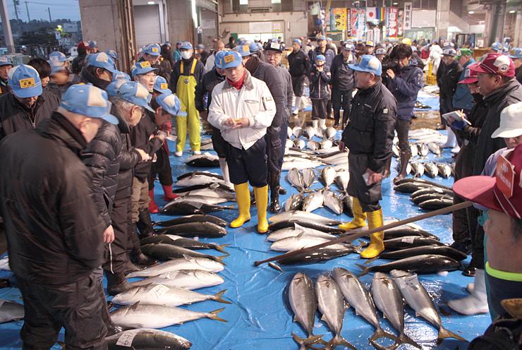 「ひみ寒ぶり」の水揚げに沸いた競り=氷見魚市場