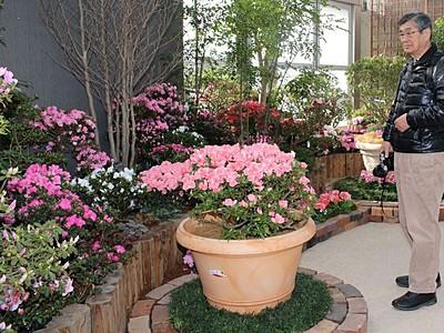 アザレア100種新春華やかに 県立植物園で企画展