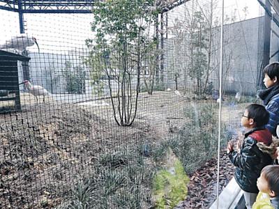 酉年、トキ人気 いしかわ動物園、3連休最終日にぎわう