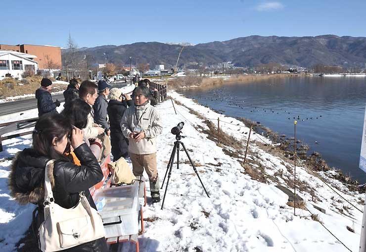 諏訪湖の横河川河口近くで水鳥を観察する岡谷市の観光サポーター。ハクチョウの姿は見えなかった