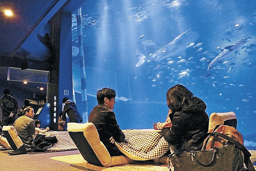 こたつに入りながら魚を観賞する来館者=七尾市ののとじま臨海公園水族館
