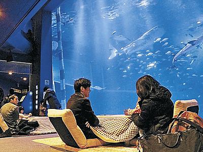 こたつでゆっくり魚眺める のとじま水族館
